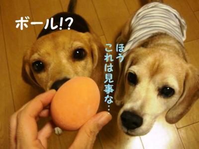 卵 2 ボールだよ