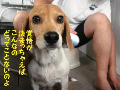 祝シャンプー 1 ひなちゃん