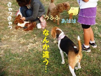 9月3 1 小型犬エリア