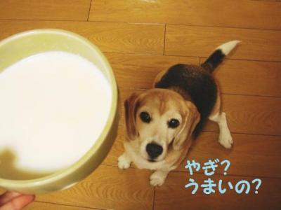 しゃなママ 7 ヤギミルク