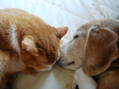 猫パンチ 2 コテツさんと弁にゃん