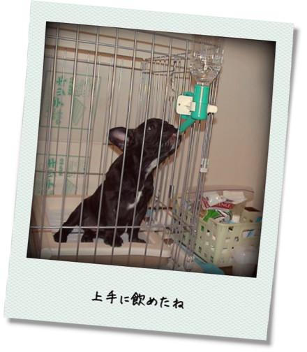photokako125336525843526.jpg