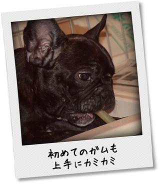 photokako125336606145787.jpg