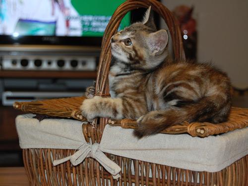 cat_3104_2.jpg