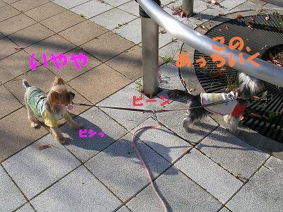犬 337