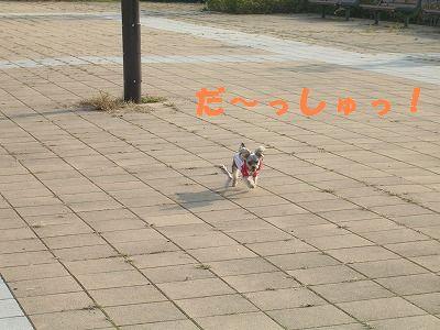 犬 368