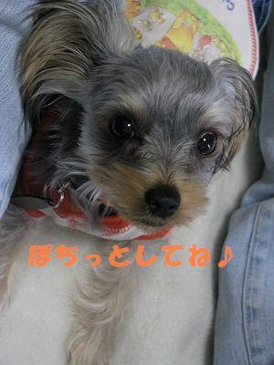 犬 398