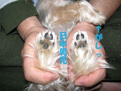 犬 421