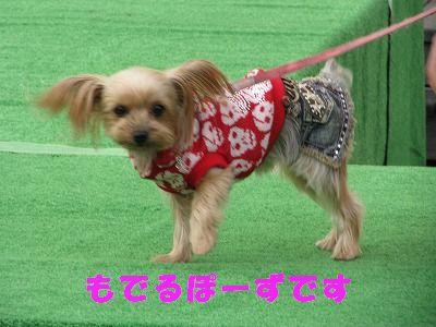 犬 496