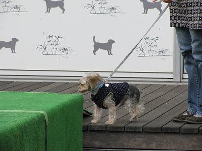 犬 465