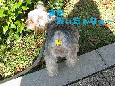 犬 563