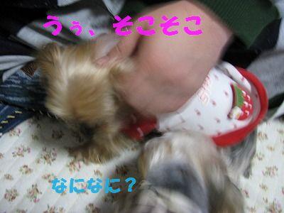 犬 572