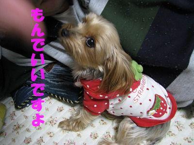 犬 574