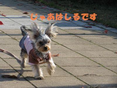 犬 642