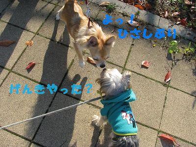 犬 631