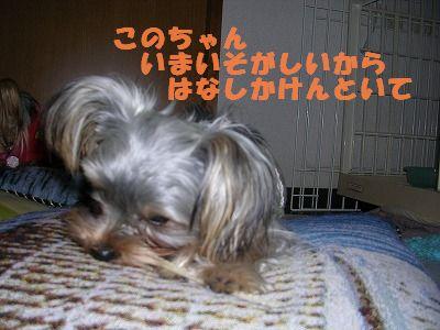犬 692
