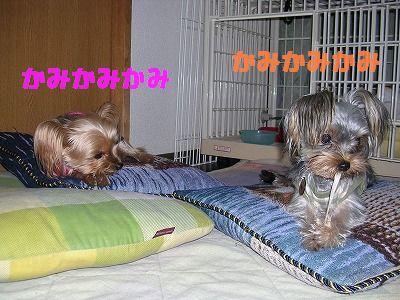 犬 701