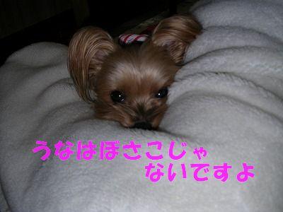 犬 719