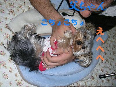犬 704