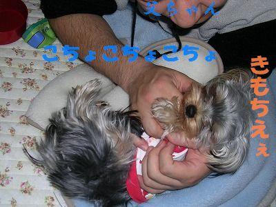 犬 703