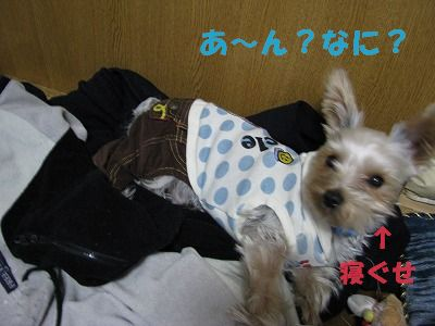 犬 733