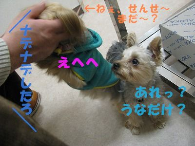 犬 823