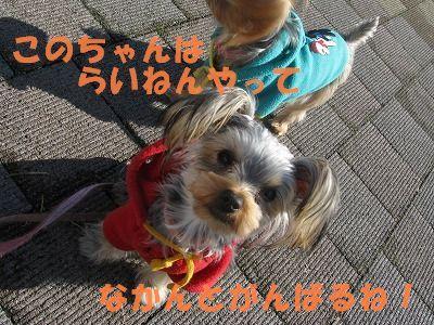 犬 833