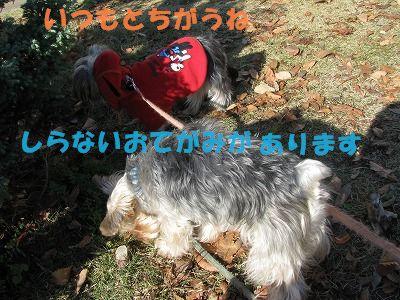 犬 813
