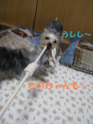 犬 801