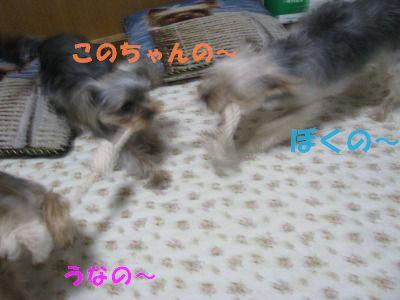 犬 779