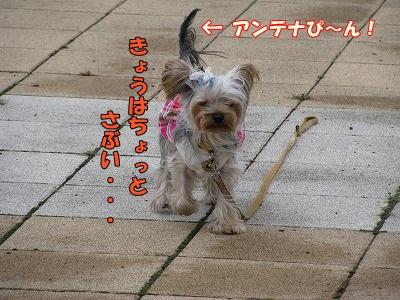 IMG_0721 (0)