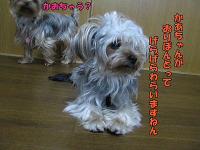IMG_0876 (0)