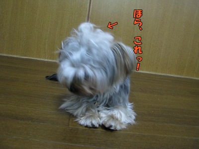 IMG_0871 (0)