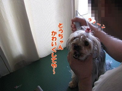 IMG_0646 (0)