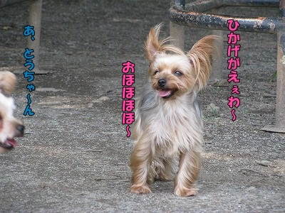 IMG_0038(1).jpg