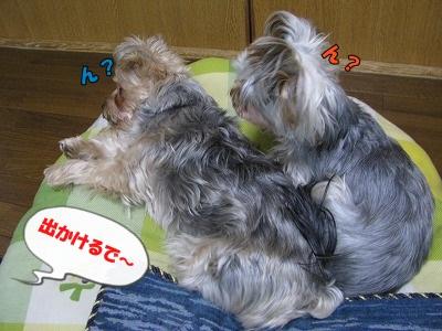 IMG_0085(1).jpg