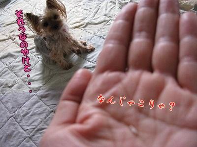 IMG_0190_20110615140123.jpg