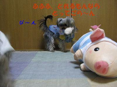 IMG_0456.jpg