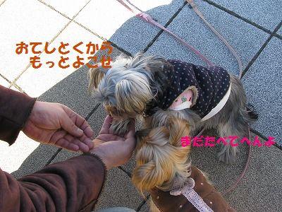 IMG_0550.jpg