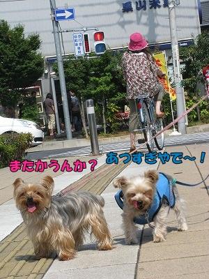 IMG_0562.jpg