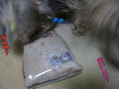 IMG_0584_20110216194825.jpg