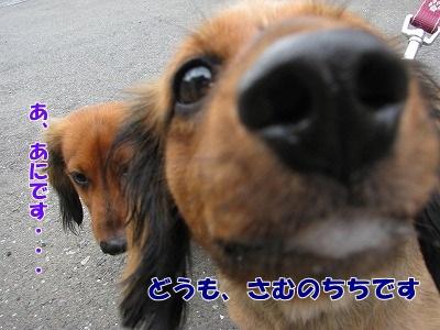 IMG_0620_20100913132322.jpg