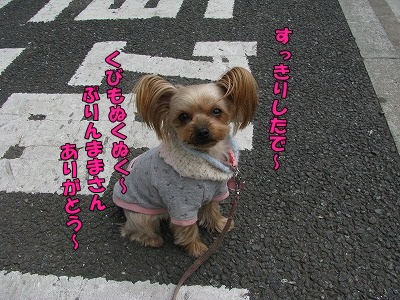 IMG_0684_20110227104144.jpg
