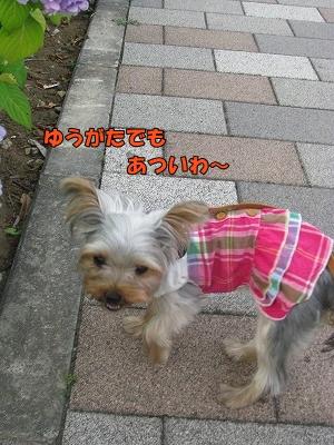 IMG_0785(1).jpg