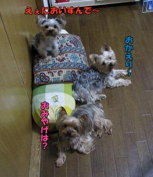 IMG_0838(1).jpg