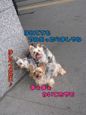 IMG_0881(1).jpg
