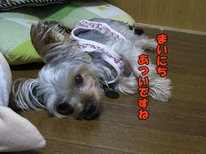 IMG_0938(1).jpg