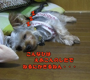 IMG_0944(1).jpg