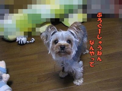 IMG_1077(0).jpg