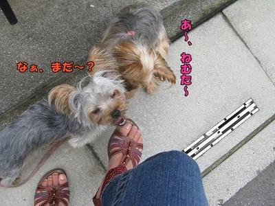 IMG_1235(1).jpg